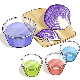 Cabbage Chem